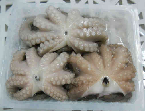 Frozen-Whole-Octopus
