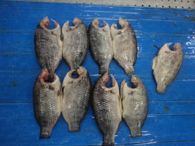 moon cut tilapia